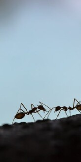 How to (Safely) Get Rid Of Pesky Ants Inside and Outside Home